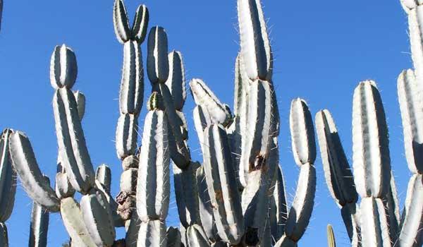 cactus names