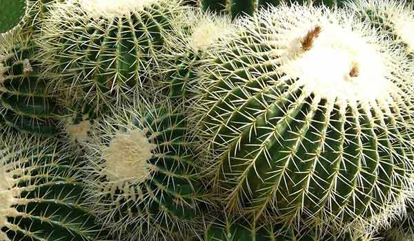 cactus names and pictures