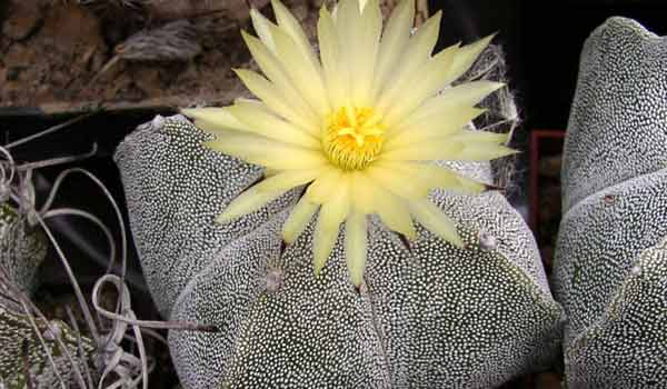 types of cactus with names